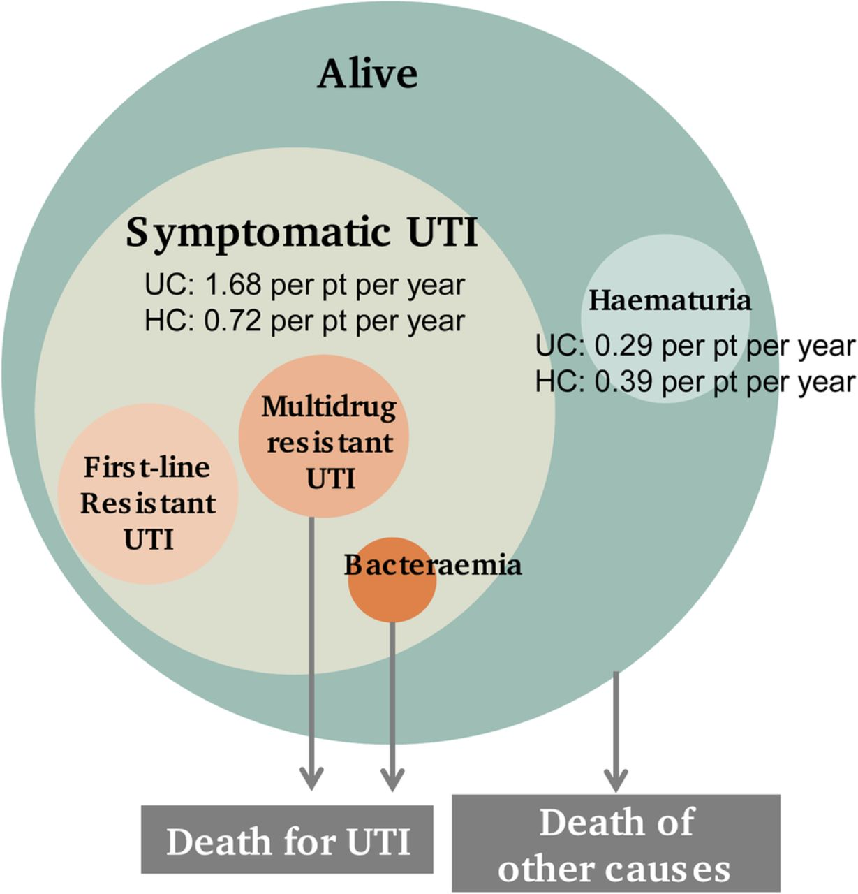 Image Result For Can Uti Cause
