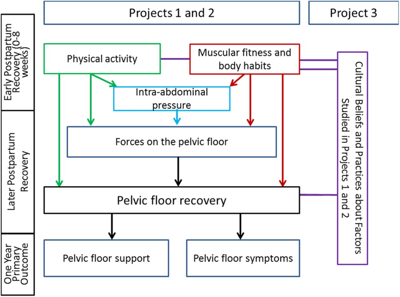 physical and cultural determinants of postpartum pelvic