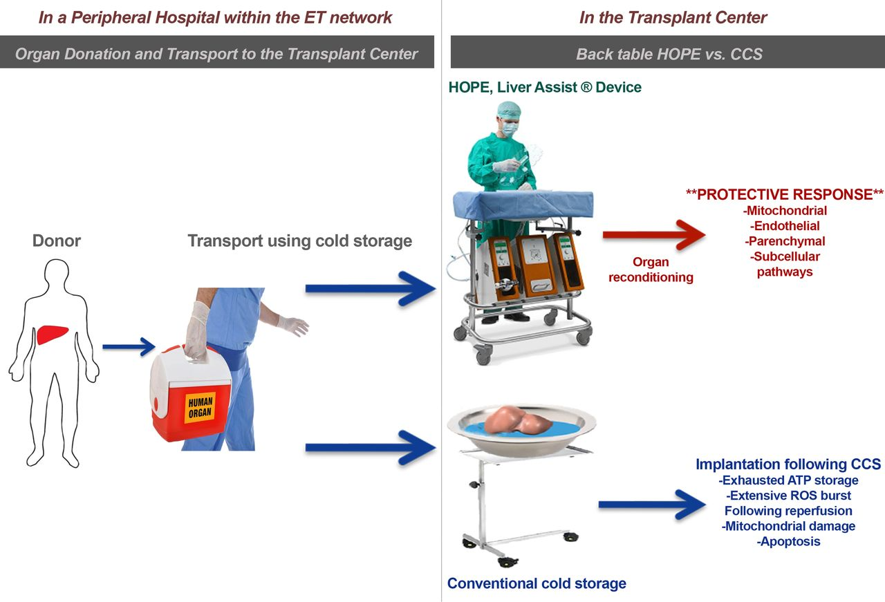 Hypothermic oxygenated machine perfusion (HOPE) for