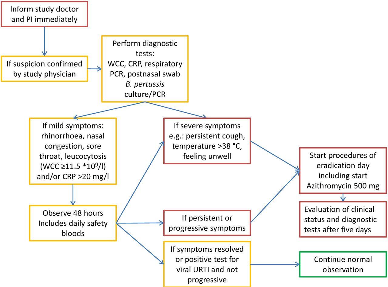 pertussis cell diagram investigating bordetella    pertussis    colonisation and  investigating bordetella    pertussis    colonisation and