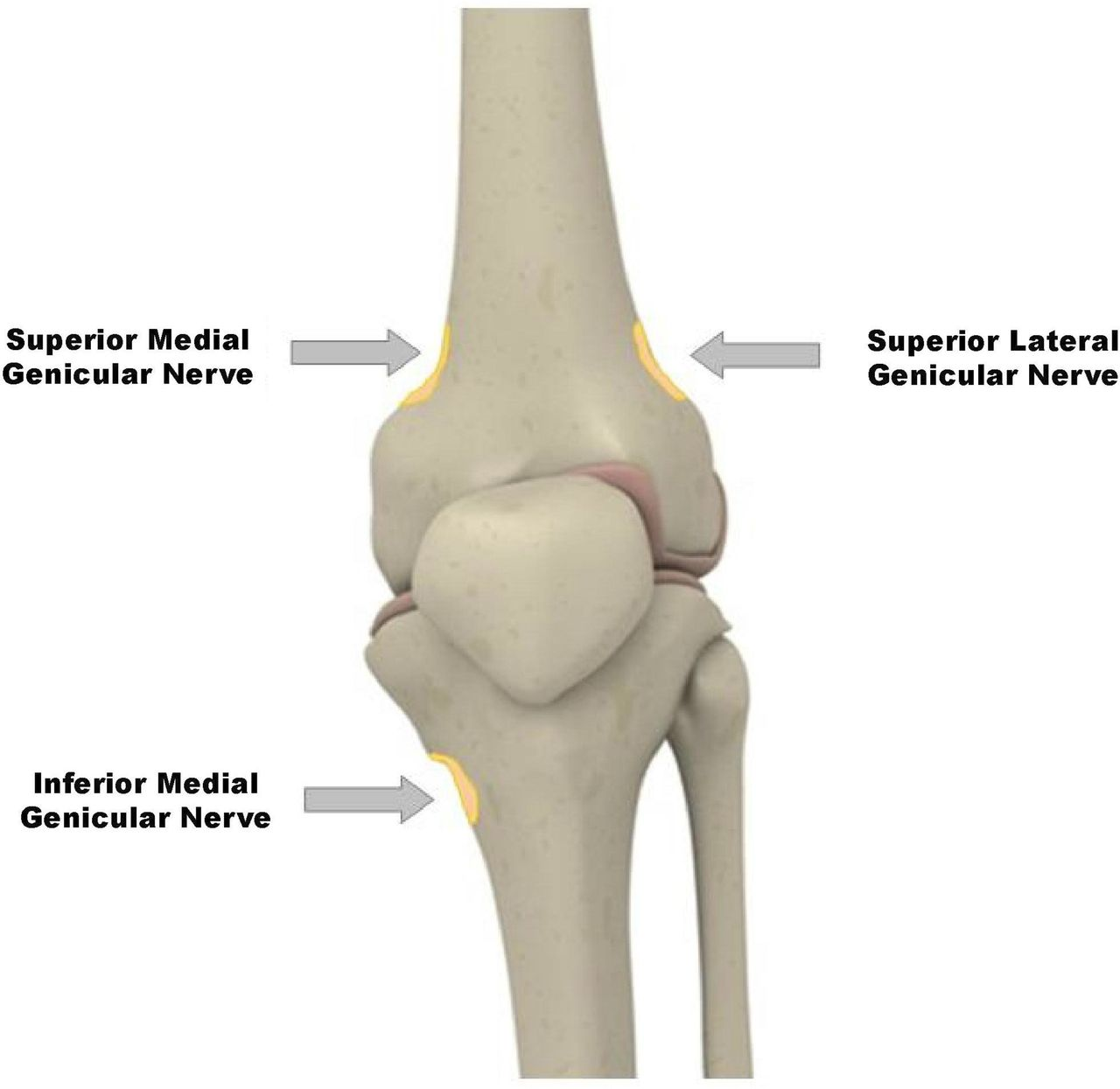 Knee Genicular Nerves Diagram - House Wiring Diagram Symbols •