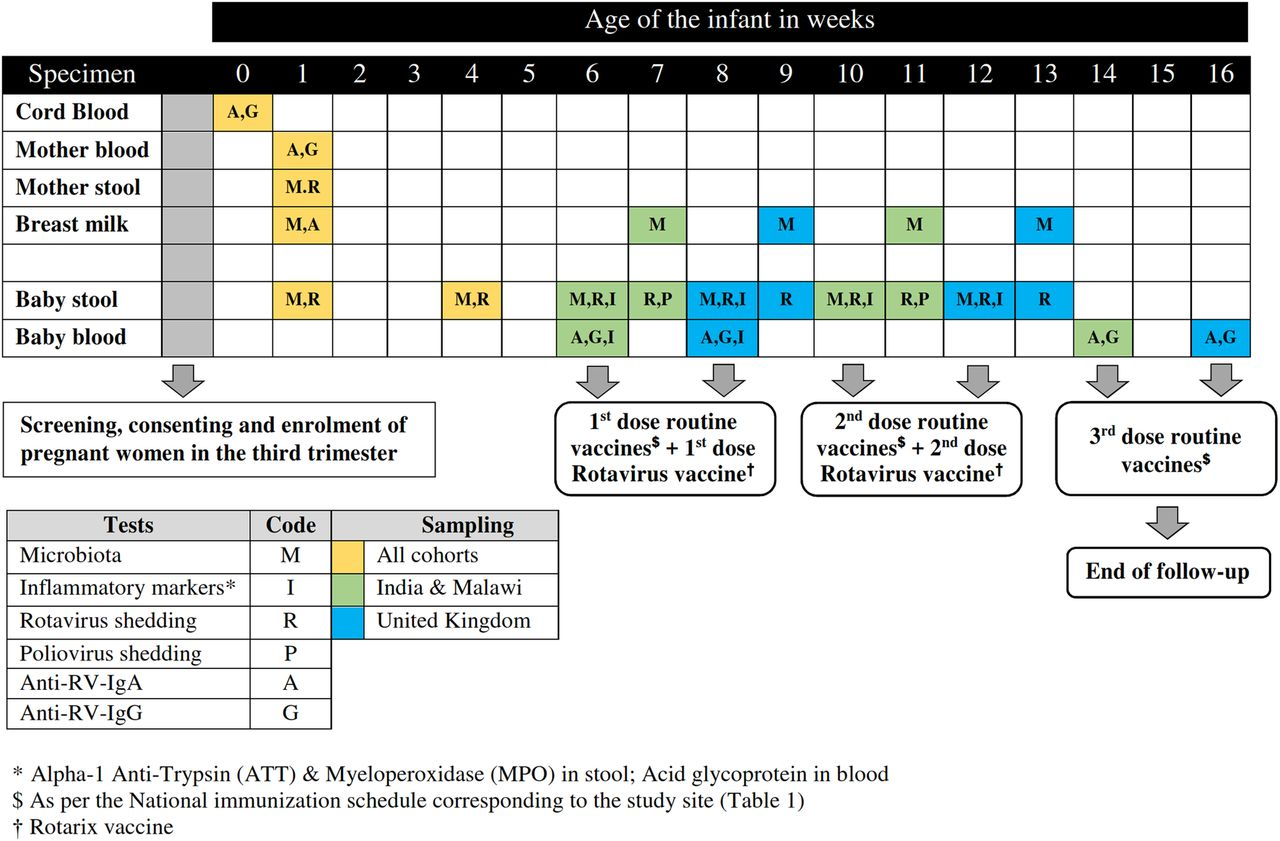 Impact Of Maternal Antibodies And Infant Gut Microbiota On